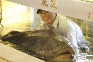 Cá mú nghệ khủng về Hàng Dương Quán