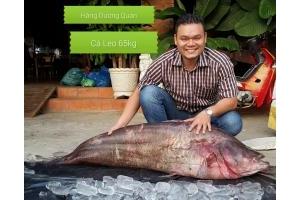 Cá Leo 65kg tại Hàng Dương Quán